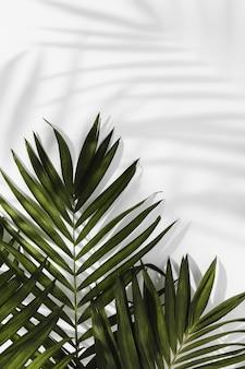 Concepto mínimo abstracto hojas y sombras