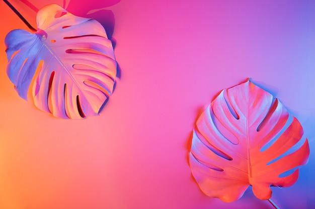 Concepto de moda abstracto con monstera tropical deja en luces de neón multicolores y copia espacio