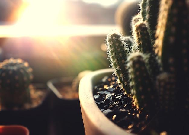 Concepto de naturaleza planta de cactus planta