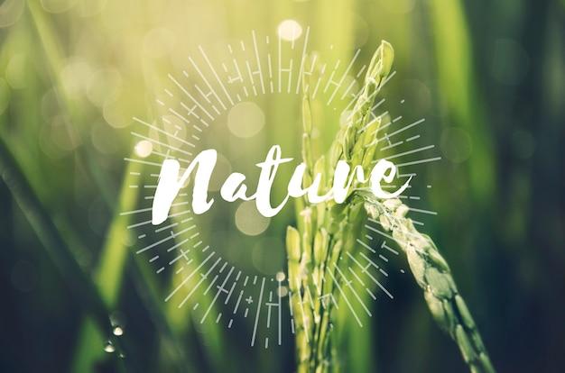 Concepto de naturaleza sostenible de agricultura alternativa