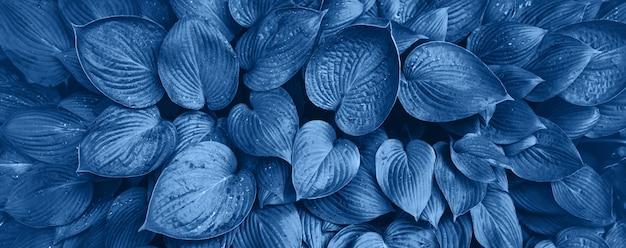 Concepto de naturaleza. vista superior. textura de hojas verdes en color monocromo. color azul de moda y tranquilo. fondo de hojas tropicales.