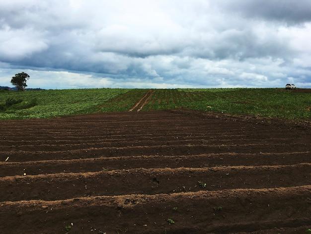 Concepto orgánico de la agricultura de la nube del campo