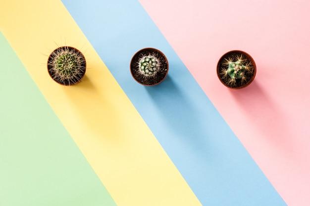 Concepto plano laico con tres cactus verdes sobre fondo multicolor diagonal a rayas.