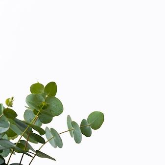Concepto de planta verde de primer plano