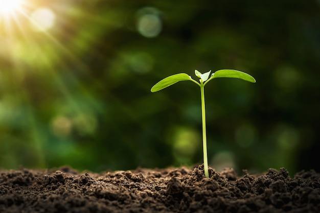 Concepto de plantación agrícola. árbol joven que crece en el suelo con luz de la mañana