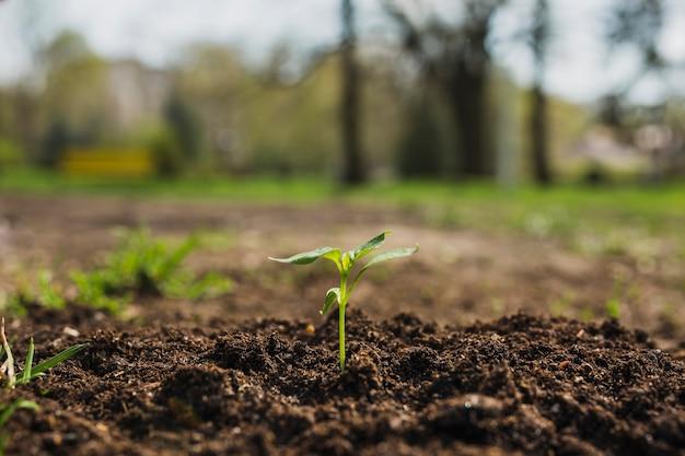 Concepto de plantar en la naturaleza