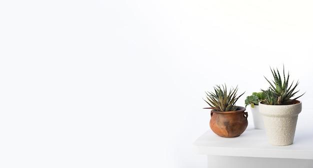 Concepto de plantas botánicas con espacio de copia