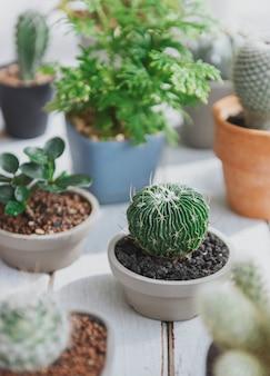 Concepto de plantas de cactus olla inicio