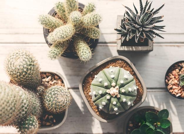 Concepto de plantas caseras de cactus pot