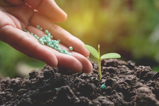 Concepto de plántula por mano humana aplicar fertilizante árbol joven sobre fondo verde