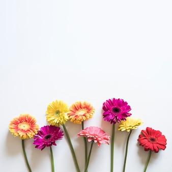 Concepto de primavera con flores coloridas