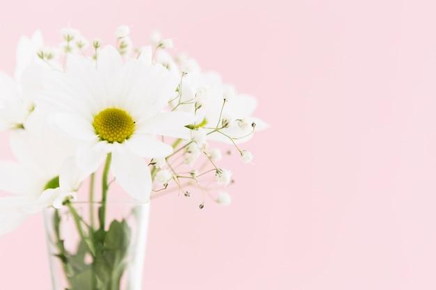 Concepto de primavera con hermosas margaritas