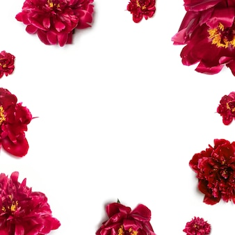 Concepto de primavera patrón de hermosas peonías rojas frescas aromáticas en blanco