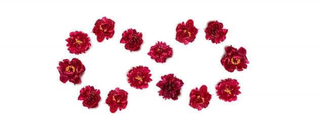 Concepto de primavera signo infinito en forma de peonías rojas sobre blanco