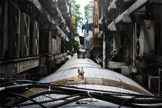 Concepto solitario de cat cat city sin hogar