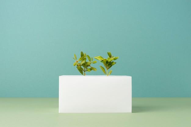 Concepto de sostenibilidad con formas geométricas en blanco y planta en crecimiento.