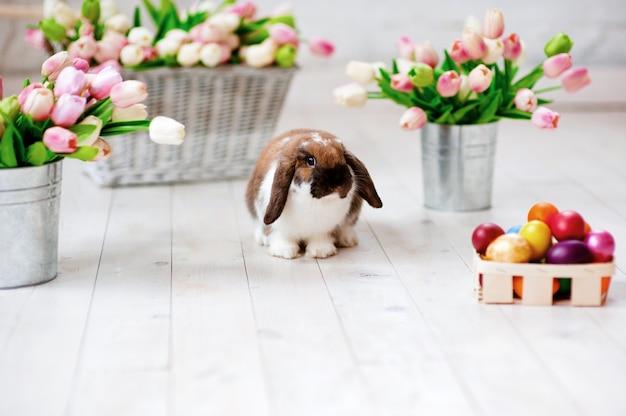 Concepto de vacaciones de semana santa. fondo colorido de los huevos de pascua. conejo de conejito de pascua.