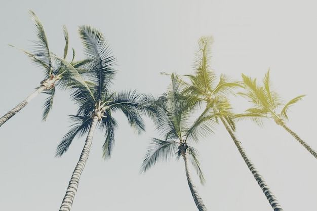 Concepto de las vacaciones de viaje de verano. palmas hermosas en el fondo del cielo azul. viraje.
