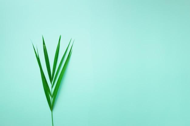 Concepto de verano mínimo. vista superior de hoja verde sobre papel de colores pastel. hojas de palmeras tropicales sobre fondo azul.