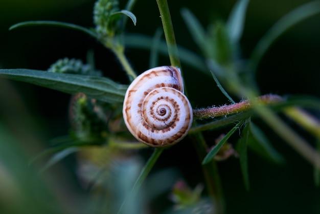 Concha de caracol en primer plano de hojas verdes.