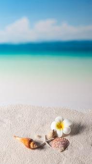 Concha y flor en la orilla del mar