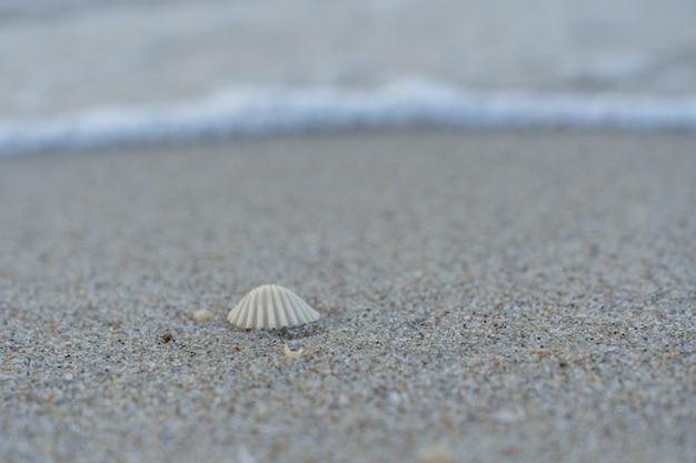 Concha de mar en la arena