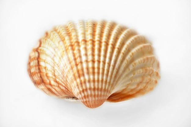 Concha de mar borrosa aislado en blanco