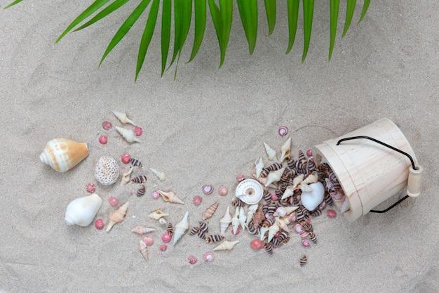 Concha de mar con plam deja en la playa.