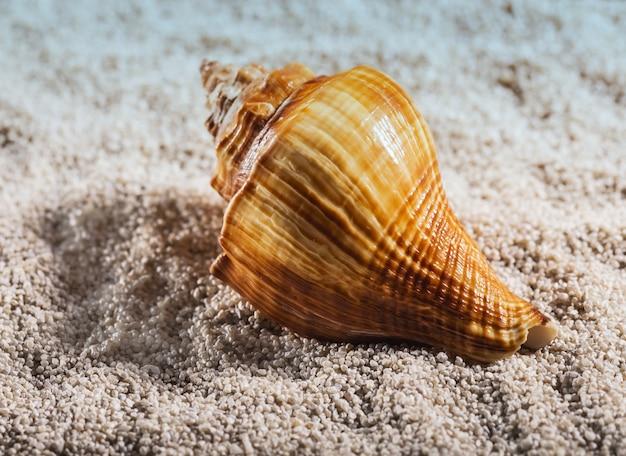 La concha marina yace sobre un guijarro blanco
