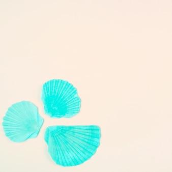 Concha de vieira turquesa pintada en la esquina del fondo beige