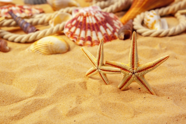 Conchas en la arena. fondo de vacaciones de verano del mar