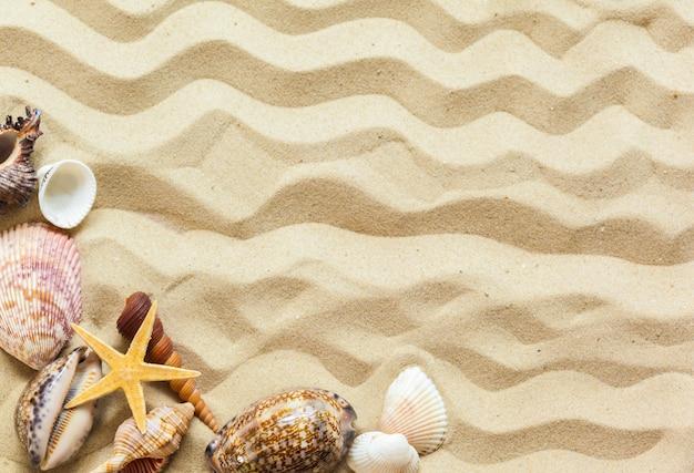 Conchas en la arena de la playa