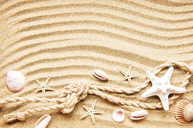 Conchas en la arena. superficie de vacaciones de verano de mar con espacio para el texto. vista superior