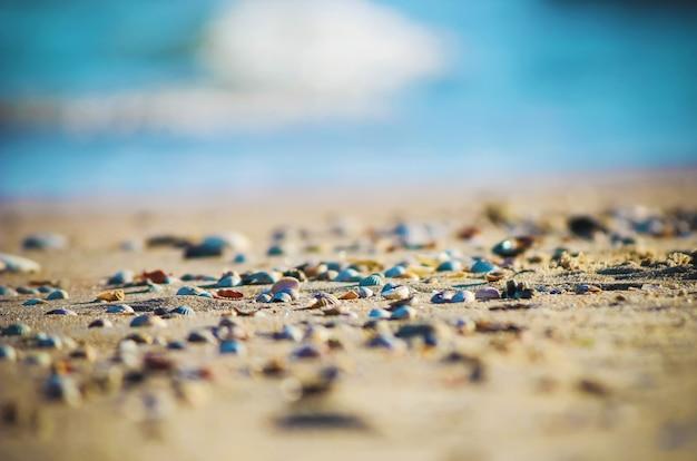 Conchas y estrellas de mar en el mar. foto de verano.