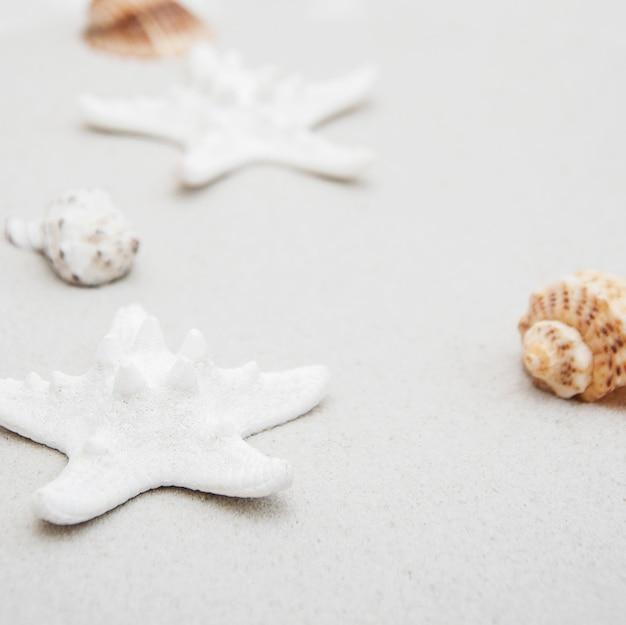 Conchas y estrellas de mar.
