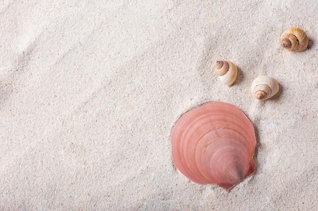 Conchas de mar con arena como fondo y copyspace, concepto de verano