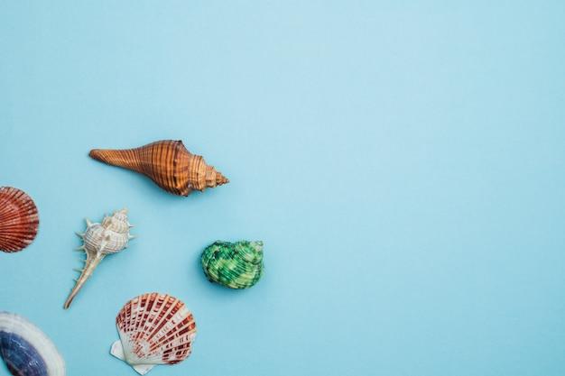Conchas de mar en azul para la decoración y el concepto de viaje