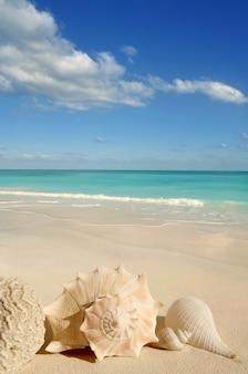 Conchas de mar estrella de mar tropical arena turquesa caribe