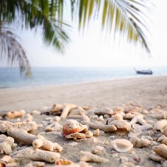 Conchas de mar y fragmentos de coral en el fondo del mar de verano playa de arena.