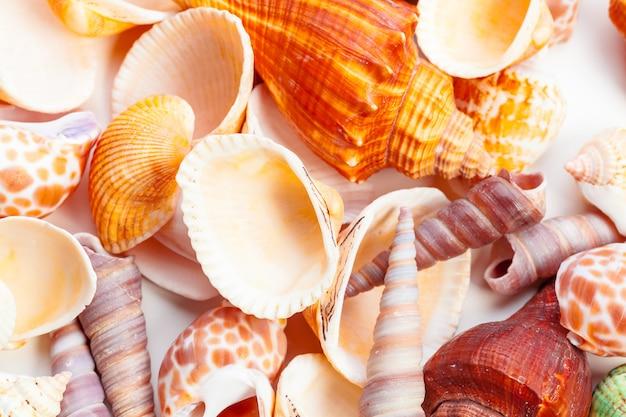 Conchas de mar. naturaleza.