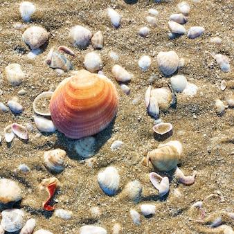 Conchas de mar en primer plano de la playa de arena