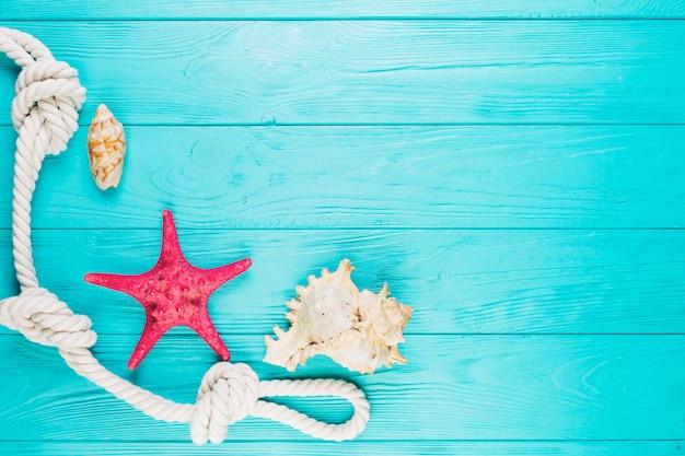 Conchas marinas y estrellas de mar cerca de la cuerda