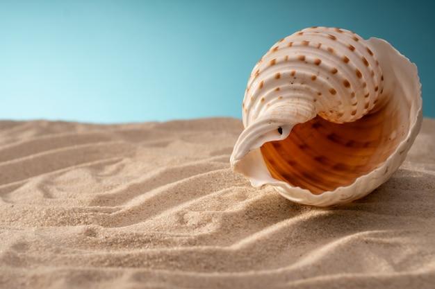 Conchas marinas naturales