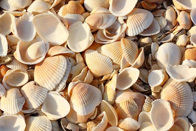 Las conchas marinas reducen a la mitad la hoja de conchas a granel en la playa. profundidad de campo completa.