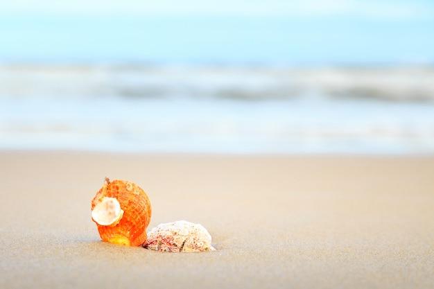 Conchas en la playa tropical con espacio de copia de texto o producto.
