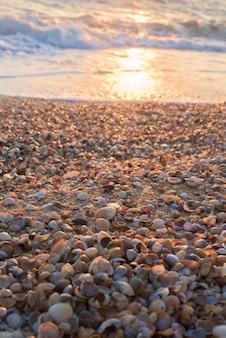 Conchas en la playa.
