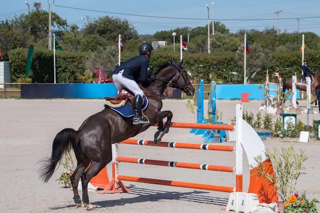 Concurso de saltos de caballos