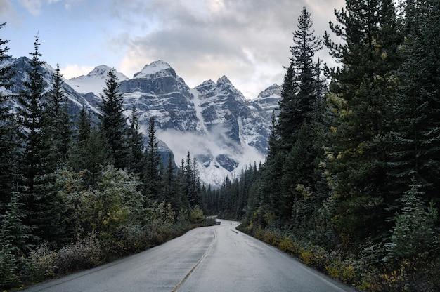 Conduciendo por carretera en bosque de pinos con montañas rocosas
