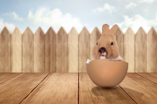 Conejito bebé en los huevos rotos sobre la mesa de madera. felices pascuas