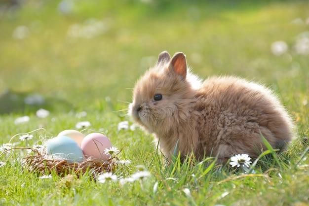 Conejito con huevo